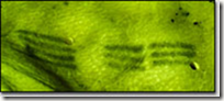 Ötzi lumiere infrarouge gizmoddo.fr.jpg 3