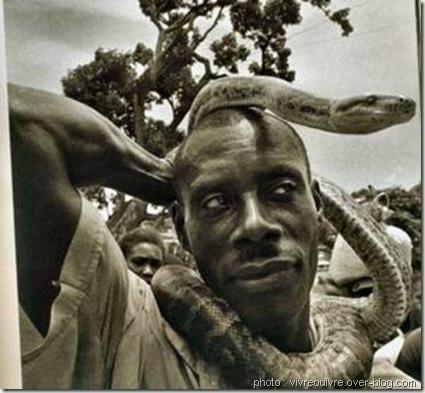 python animal sacré