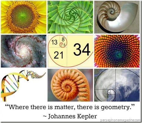 Fibonacci spirals - www.wonderful-art.fr