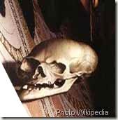 anamorphose-Skull-Ambassadors