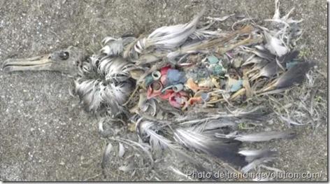Ocean Sole_Julie Church_recyclage des déchets_creation de sculptures_recyclage des tongs en oeuvre d'art_www.wonderful-art.fr