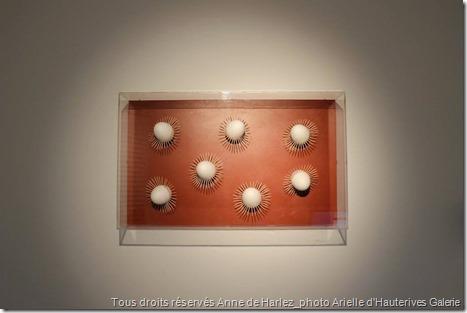 Galerie-Arielles-d'hauterives_découvertes-hivernales_2015_5