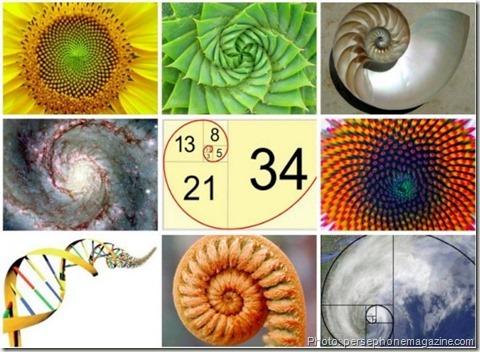 fibonacci nature-Fibonacci-spiral-#2-série DELTA-Emmanuelle Prudhomme-dessin contemporain- spirale de Fibonacci-fractales-triangle-dessin géométrique